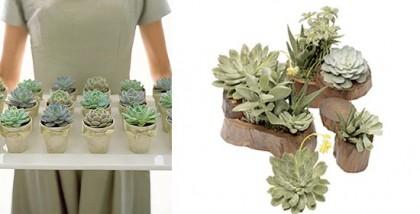 succulents_07